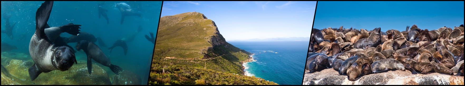 South Africa d14